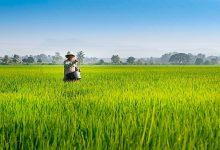 Photo of KEDA pulih semula 457 hektar tanah terbiar di Kedah